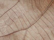 Texture et fond secs de feuille Photographie stock