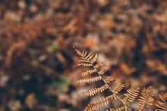 Texture et fond secs de fougère La fin vers le haut de la vue de la fougère sèche laisse dans la forêt fond organique et naturel Images stock