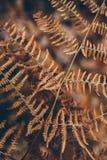 Texture et fond secs de fougère La fin vers le haut de la vue de la fougère sèche laisse dans la forêt fond organique et naturel Image libre de droits