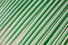 Texture et modèle des palmettes tir de macro de cocotiers de feuille images libres de droits