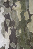 Texture of Eucalyptus tree bark Stock Photography