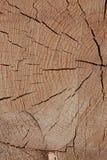Texture extérieure brune beige légère sciée en bois naturelle beaucoup de lignes bois sec par conception rustique de base de fond photos stock