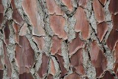 Texture extérieure en bois de photo de fond Image libre de droits