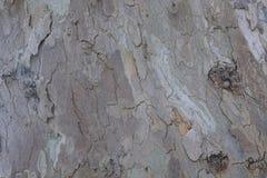 Texture extérieure en bois de photo de fond Image stock