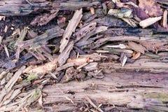 Texture extérieure en bois superficielle par les agents et fissurée Photographie stock