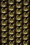 Texture fabric cat head Stock Image