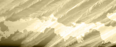 texture feather structure cloudy sunrise Royalty Free Stock Images