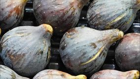 Texture of figs. In the garden stock footage
