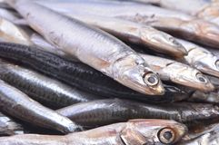 Fish of sprat royalty free stock images