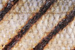 Texture of fish  grill skin close up. Stock Photos