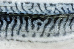Texture fish mackerel Stock Images