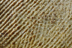 Texture of flat bread Stock Photos