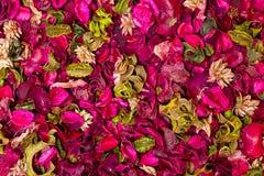 Texture floral rug Stock Photos