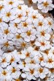Texture of flower Stock Photo