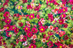 Texture flower pink or red Royalty Free Stock Images