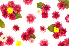 The texture of flowers and leaves Royalty Free Stock Image