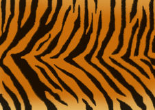 Texture - a fluffy skin of a tiger Royalty Free Stock Photo