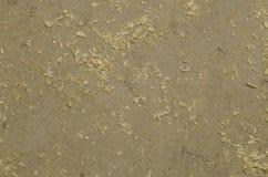 Texture focalisée de plancher gris avec les copeaux en bois Image stock