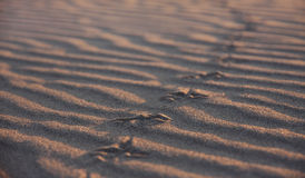Texture of footprints in the sand Royalty Free Stock Photography