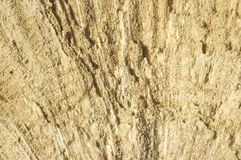 Texture formed by the corals in coastal limestone. Royalty Free Stock Image