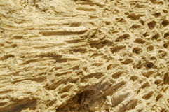 Texture formed by the corals in coastal limestone. Royalty Free Stock Photos