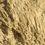 Texture formed by the corals in coastal limestone. Royalty Free Stock Images