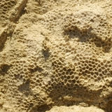 Texture formed by the corals in coastal limestone. Stock Photos