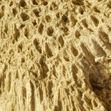 Texture formed by the corals in coastal limestone. Stock Image