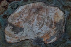 Texture of fossil wood Royalty Free Stock Photo