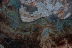 Texture of fossil wood Stock Image