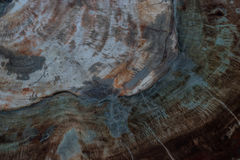 Texture of fossil wood Stock Photos
