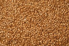 Texture of fresh clean useful buckwheat groats grain close-up. Healthy dietary food rich in microelements cellulose.  Royalty Free Stock Image