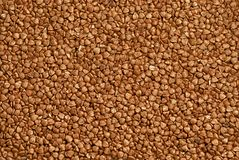 Texture of fresh clean useful buckwheat groats grain close-up. Healthy dietary food rich in microelements cellulose.  Stock Image