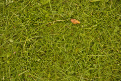 Texture 7. Fresh cut grass on the green lawn in nature Stock Image