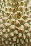 Texture fresh durian Royalty Free Stock Photography