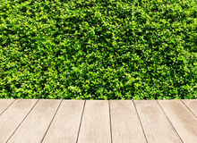 Texture of fresh green grass or foliage Stock Image