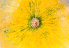 Texture of Fresh yellow organic decorative pumpkin Stock Photography