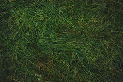 Texture of freshly mown grass lawn Royalty Free Stock Images