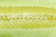 Texture of freshness cucumber. Stock Photography