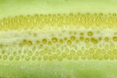 Texture of freshness cucumber. Royalty Free Stock Photography