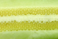 Texture of freshness cucumber. Stock Image