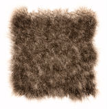 The texture of fur bear Stock Photography