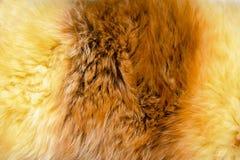 Texture of fur - fox - high resolution Royalty Free Stock Photos