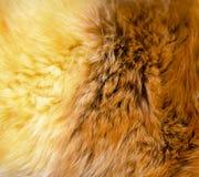 Texture of fur - fox - high resolution Stock Image