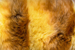 Texture of fur - fox - high resolution Royalty Free Stock Image