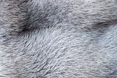 Texture from fur of gray-haired color Royalty Free Stock Photography