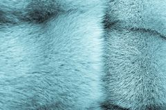 Texture from fur of indigo color Royalty Free Stock Photography