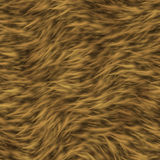 The texture of fur of a lion. Stock Photo