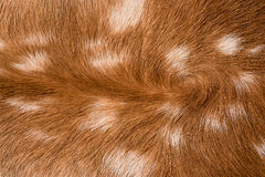 Texture of fur Royalty Free Stock Images