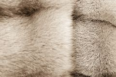 Texture from fur of sepia color Royalty Free Stock Images